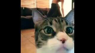 Полный ржачь  кот снимаеться пока что девушка снимает себя приколы над животными 2015 апрель