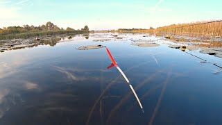 Рыбалка на поплавок в кувшинках Ловля на маховую удочку