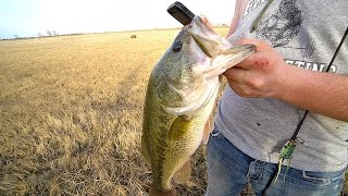 my BEST day Pond Fishing EVER!!!