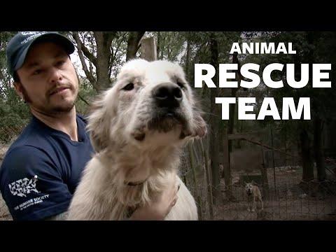 HSUS: Animal Rescue Team