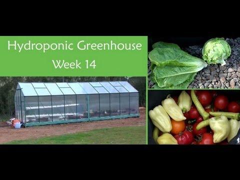Hydroponic Greenhouse Vegetables – Week 14