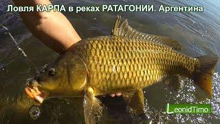 Ловля КОРОПА в ріках ПАТАГОНІЇ.