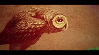 Hawaii Videography - OWLS ON STILTS - Oahu Films | Hawaii Film Production