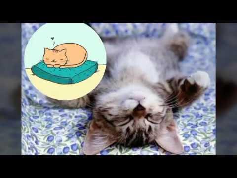 Cani e gatti teneri e dolci youtube for Youtube cani e gatti