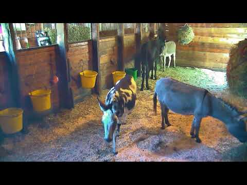 AM Barn Care Grace cp Lee video ends 1230pm 10102017