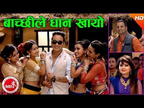 New Typical Jhyure Song | Bachchhile Dhan Khayo - Chandra Sharma & Tika Tarami Magar Ft, Ramji