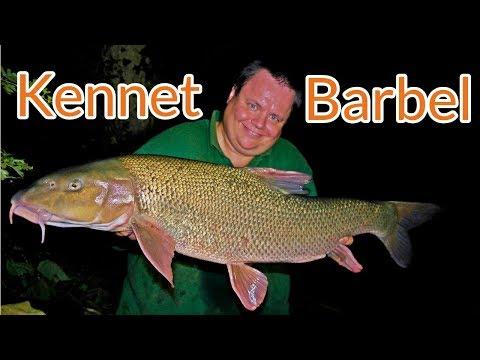 Barbel Fishing - River Kennet (Video 126)