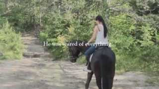 This horse saved my life, 3 years ♥