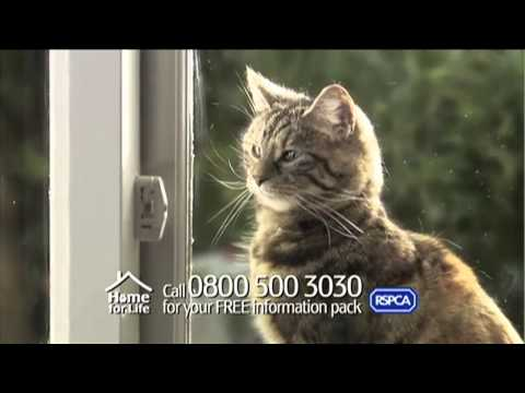 RSPCA Advert    Home For Life TV AD