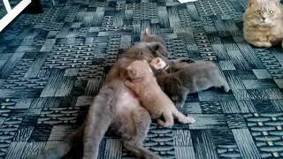 Какая жизнь у кота? Самое милое видео