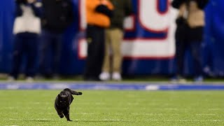 Black Cat Puts Mnf Cowboys-giants Game On 'paws' By Rushing Field   Nbc New York