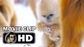 BORN IN CHINA Movie Clip - Snow Cha Cha (2017) Disney Nature Film HD