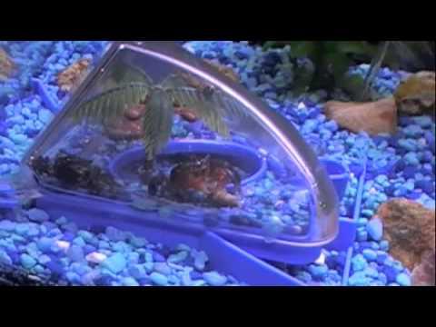 aquarium crab habitat - YouTube
