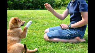 How To Train Your Dog - Sit And Come Also Not To Bark