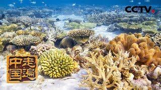 《走遍中国》系列片《海洋卫士-我在南海种珊瑚》种珊瑚!他们是如何完成这个看似不可能的任务呢?20190807 | CCTV中文国际