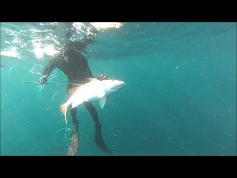 Jupiter Fishing - Killshot Spearfishing Charters