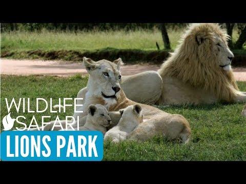 LION AND SAFARI PARK(LIONS PARK) Johannesburg, South Africa Tourism