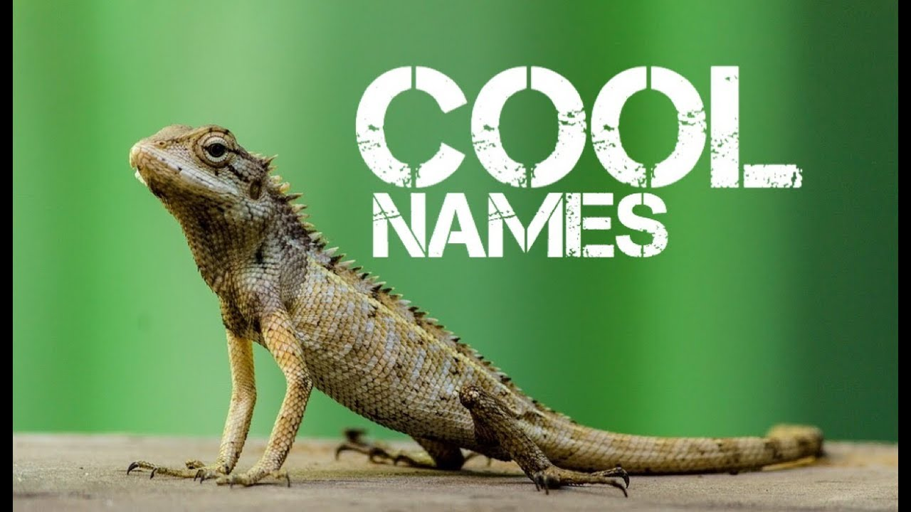 male reptile pet names starting with r - YouTube