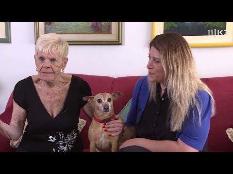 'הכלב בסך הכל זקן': בית אבות מיוחד לכלבים