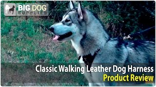 Siberian Husky And Other Dogs Wearing Stylish Dog Harness