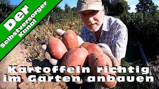 Kartoffeln richtig im Garten anbauen