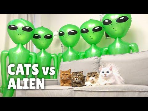 Cats vs Alien