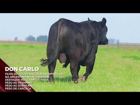 Touro Don Carlo - Aberdeen Angus indicado para IATF - RENASCER BIOTECNOLOGIA VIDEO