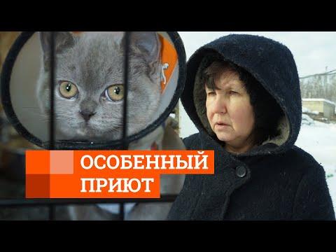 Приют для животных-инвалидов   E1.RU