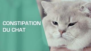 Mon chat est constipé : comment le soigner ? - Animaux