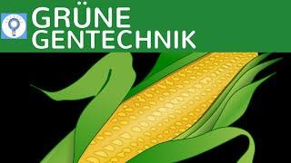 Grüne Gentechnik - Transgene Pflanzen & Transgene Tiere einfach erklärt & Beispiele | Gentechnologie