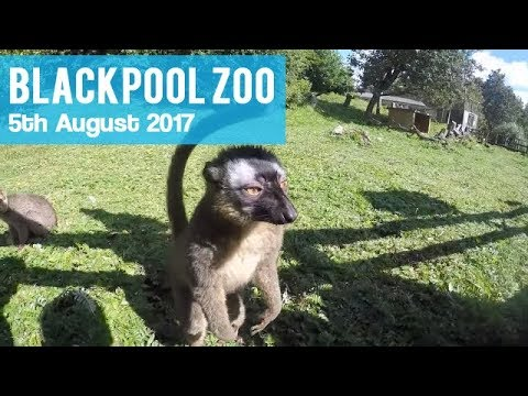 Blackpool Zoo Animals Review | A Great Family Day Out At Our Nearest Zoo | August 2017