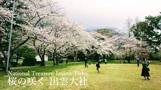 桜の咲く国宝 出雲大社(2018年3月)National Treasure Izumo Tisha