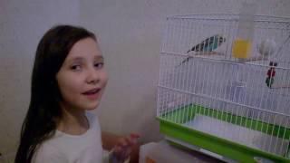 новый ПИТОМЕЦ Попугай идём покупать