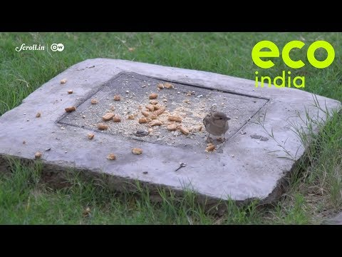 Eco India, Episode 32: How birds have adapted to living in concrete jungles