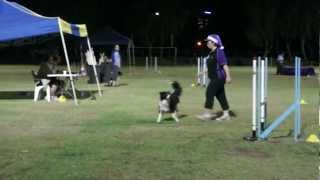 Lisa And Sassy - Novice Agility; Purple Trial At Gold Coast Qld.