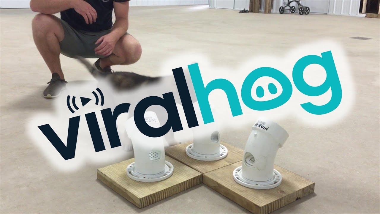 Дневна доза неодоливост: Како се тренира кутре?
