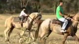 An Arab child riding a horse.flv