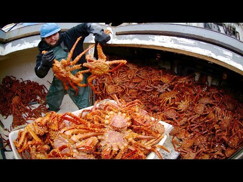 Big Catching King Crab In The Sea, Inside A Crab Trap Underwater