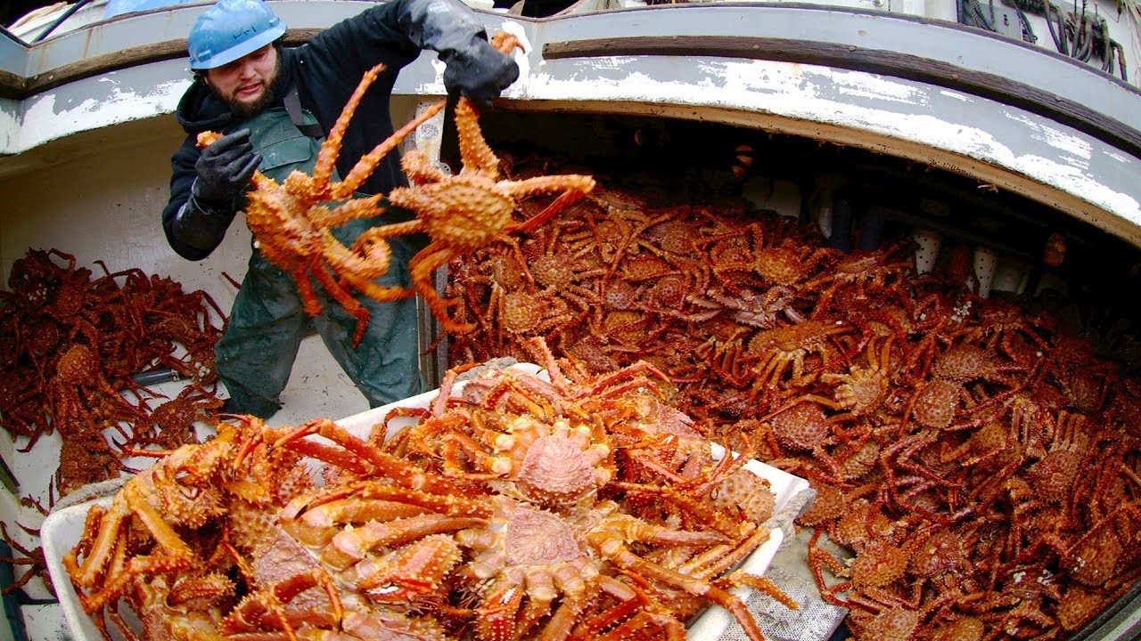 Big Catching King Crab In The Sea Inside A Crab Trap Underwater Youtube