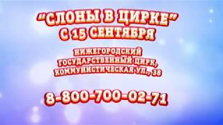"""Большой Варшавский Цирк """"Слоны в цирке"""""""