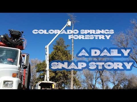 Colorado Springs Forestry - A Daily Snap Story