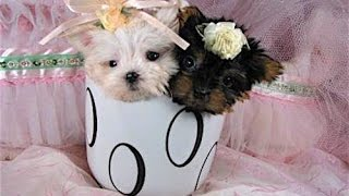 I 10 mini cani più desiderati del mondo
