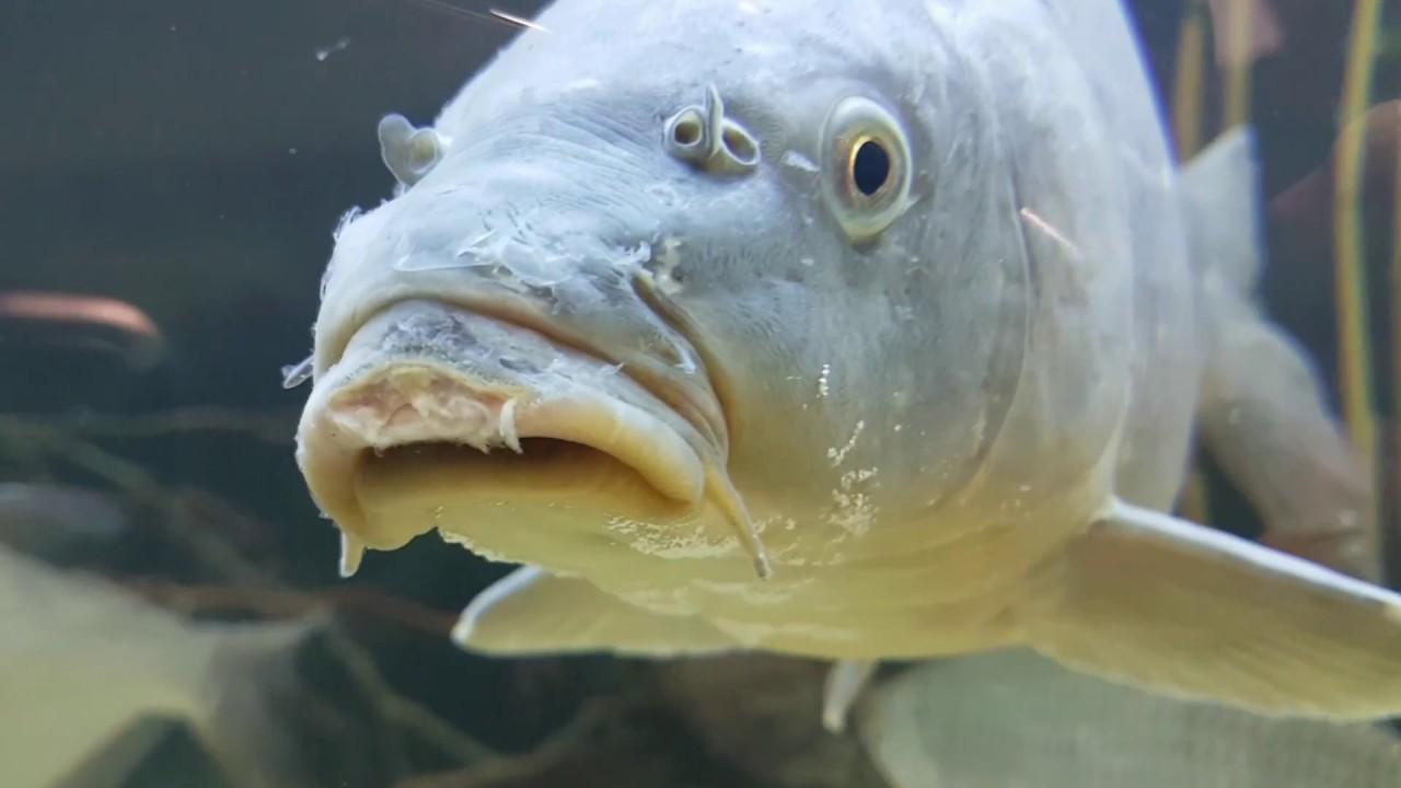 fische aquarium verschiedene fische im aquarium youtube