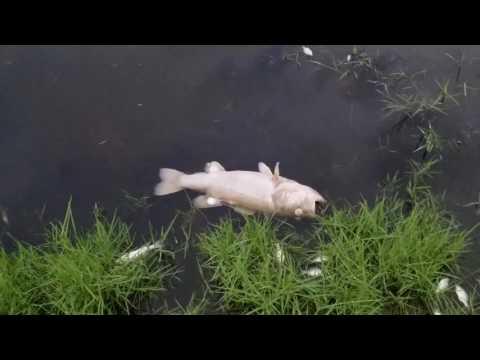 Ancient futures dr Tampa Florida pond
