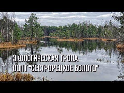 Экологическая тропа ООПТ Сестрорецкое болото (экотропа)