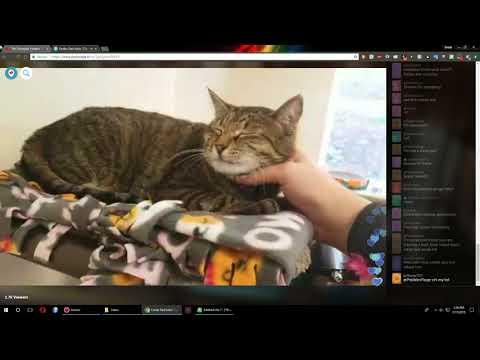 Olympian Kittens - Adoption Event Periscope 2