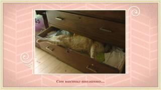 25 котов, постигших искусство сон фу