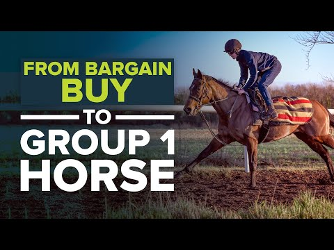HOW TO TURN A £6,500 RACEHORSE INTO A GROUP 1 HORSE