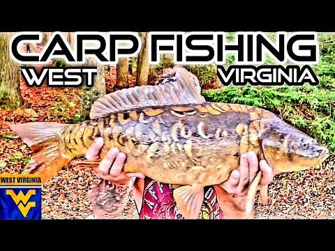 FALL CARP FISHING A PUBLIC PRESSURED LAKE=TRANSITION MIRROR CARP (MARGIN/BANK FISHING)