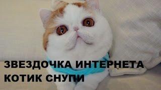 Звездочка Котик Снупи Snoopy cat